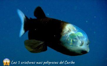 extrañas criaturas mar caribe