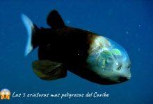 Photo of Las 5 criaturas más peligrosas del caribe