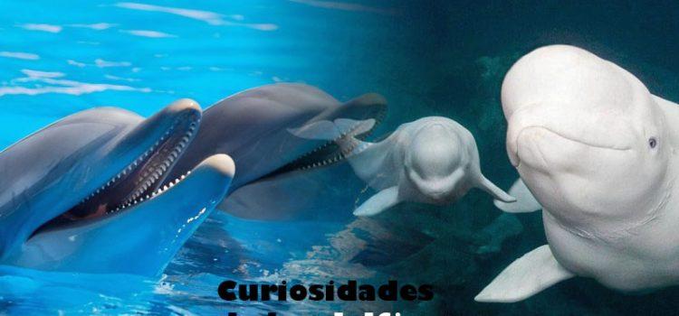 delfines curiosidades