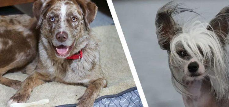 razas perros raras