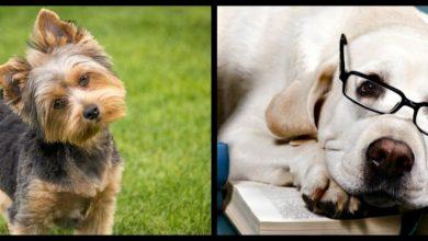 Photo of Curiosidades que quizá no conocías sobre los perros