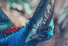 el ave mas peligrosa