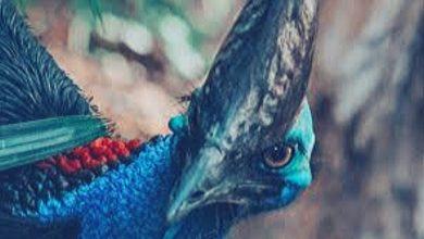 Photo of El ave mas peligrosa del mundo