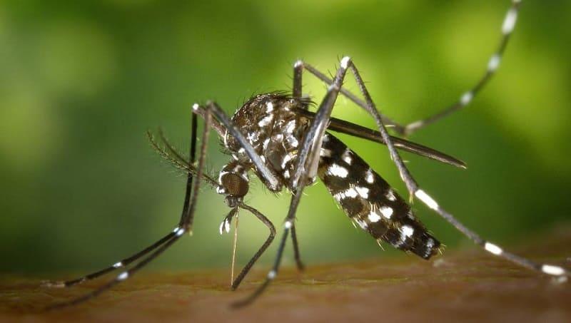 animales mas peligrosos mosquitos