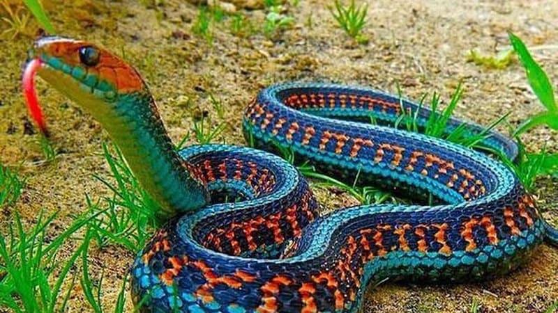 serpientes animales peligrosos