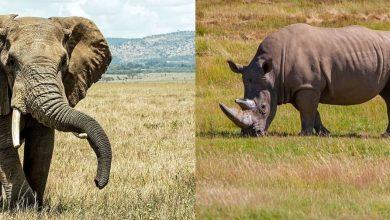 elefante mas grande mundo